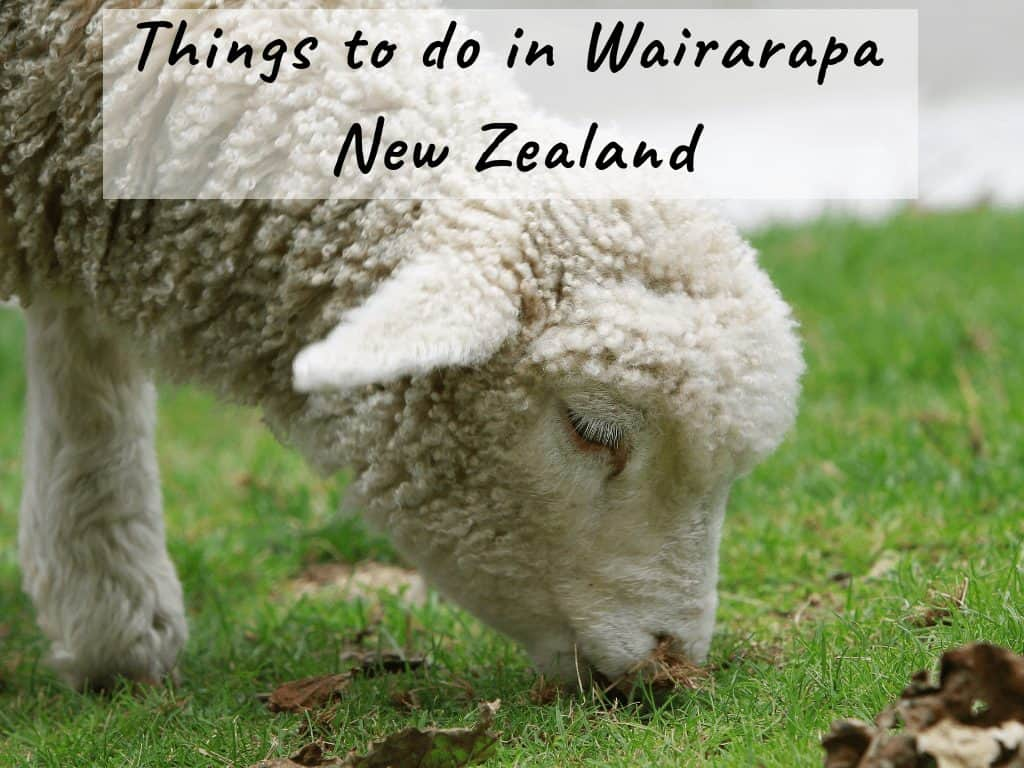 Things to do in Wairarapa, New Zealand + Food, Accommodation & More!