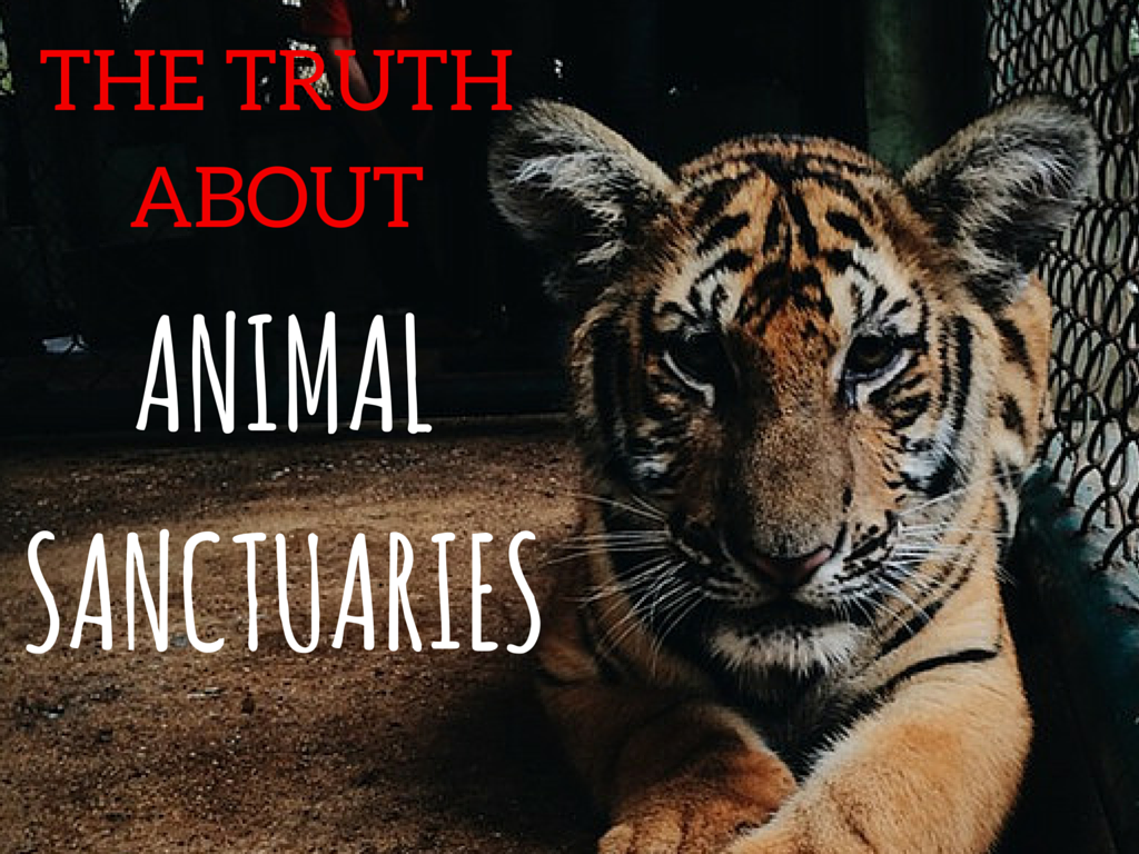 The Truth About Animal Sanctuaries