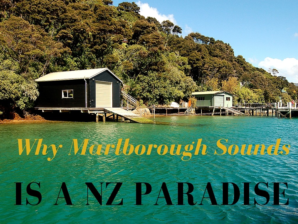 Why Marlborough Sounds Is a New Zealand Paradise