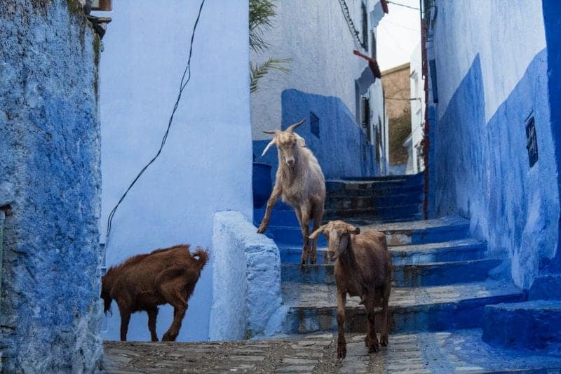10 unique things to do in Fes - Morocco