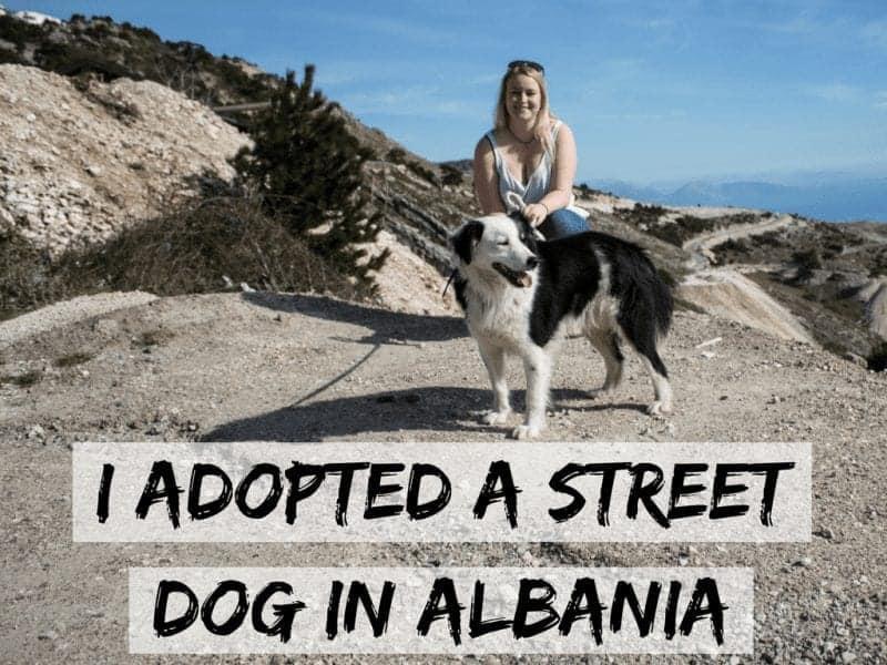 I Adopted a Street Dog in Albania