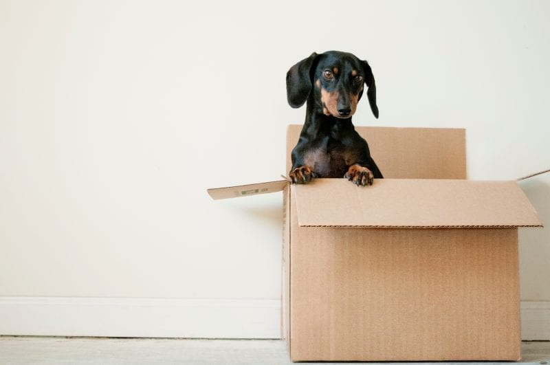 5 Things to Do Before Moving Into Your First House