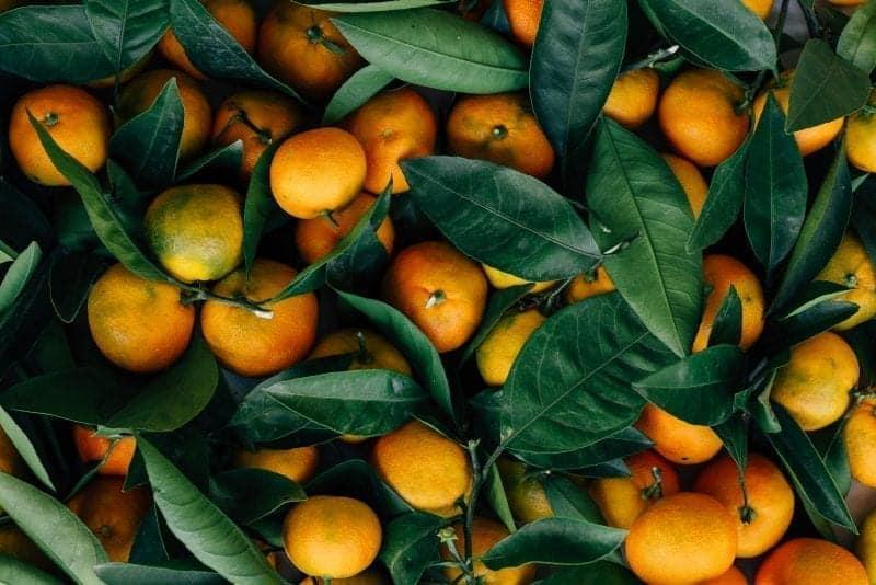 Albanian Weekly Aventurës 5: Mandarins and Farts