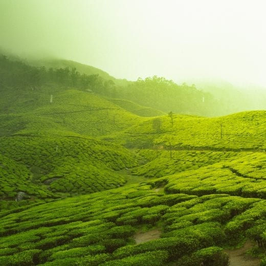 10 Incredible Places to Visit in Kerala, India